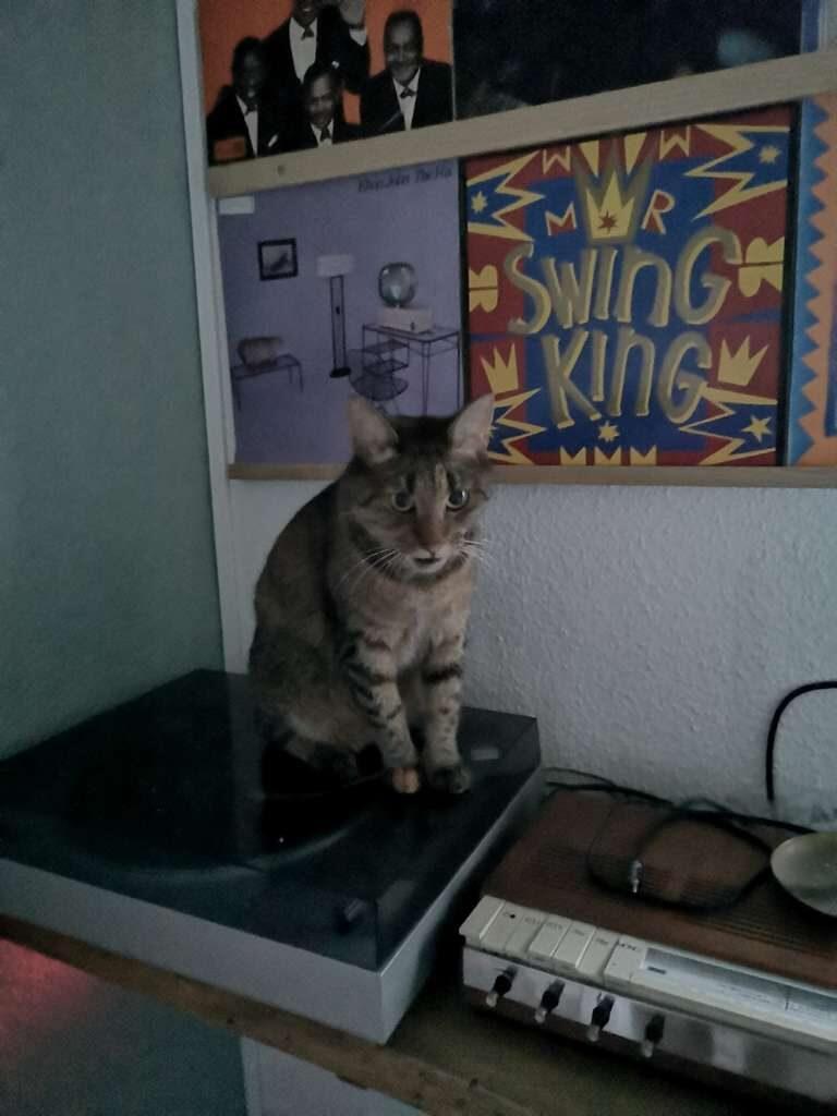 Katt - Fruen i Holstebro